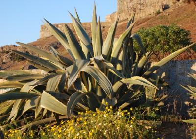 Cactus de Punta de Tralca