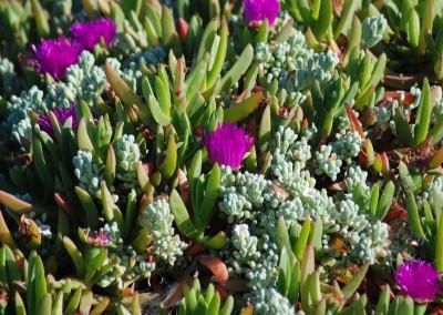 Flor de Docas