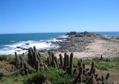 Quiscos en Punta de Tralca